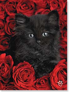 Valentine's Day Card - Have a purrfectly wonderful Valentine's Day. | Rachael Hale® | 10757 | Leanin' Tree
