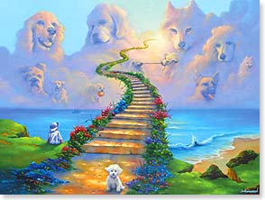 Sympathy Card for Pet - Somewhere on the other side, our sweet companions play... | Jim Warren | 10981 | Leanin' Tree