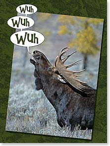 Birthday Card - Wuh Wuh Wuh That's Moose for Happy Birthday | Claude Steelman | 13101 | Leanin' Tree