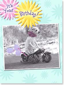 Birthday Card - It's your birthday...live high on the hog! | Christina Bynum Breaux | 13425 | Leanin' Tree
