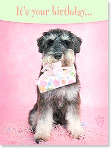 Birthday Card - Make sure you 'paws' to enjoy it! | Rachael Hale® | 13434 | Leanin' Tree