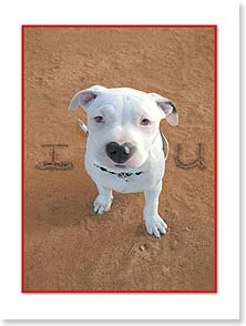 Birthday Card - Puppy Love | Susan Y. Davis | 13727 | Leanin' Tree