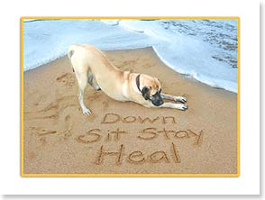 Get Well Card - Down, Sit, Stay... Heal | Susan Y. Davis | 13740 | Leanin' Tree