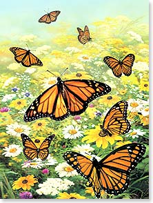 Birthday Card - Bright Butterflies | Greg Giordano | 13854 | Leanin' Tree
