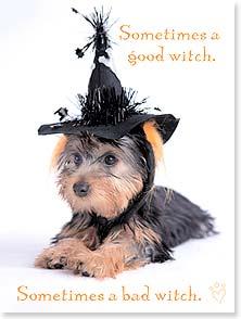 Halloween Card - Good Witch, Bad Witch, Cute Witch - 13930 | Leanin' Tree
