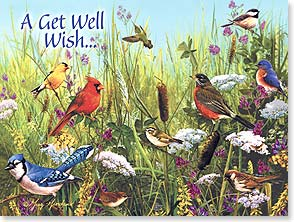 Get Well Card - Bright Wishes | Greg Giordano | 15524 | Leanin' Tree