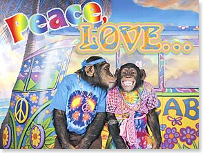 Anniversary Card - Peace, love...and lots of monkeying around! | Kimball Stock | 15784 | Leanin' Tree