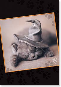 Halloween Card - Best Witches for a Happy Meowloween!  | Rachael Hale® | 16803 | Leanin' Tree