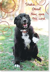 Birthday Card - Teaching an old dog new tricks | Grace Chon | 16962 | Leanin' Tree