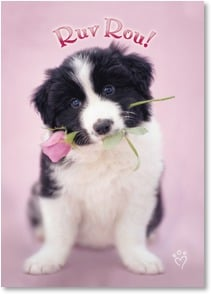 Birthday Card - Puppy Ruv | rachaelhale® Dissero Brands | 1_2000179-P | Leanin' Tree