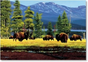 Blank Card - Bison Country | Reid Christie | 1_2000666-P | Leanin' Tree
