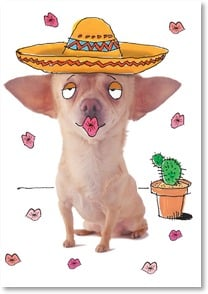 Birthday Card - Muchas Smoochas to You! XOXOX | Harvey Gariety | 1_2001613-P | Leanin' Tree