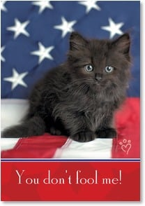 Veterans Day Card - Still plenty of claw to that kitty! | Rachael Hale® | 1_2002372-P | Leanin' Tree