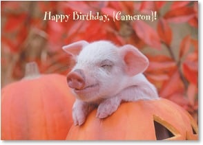 Birthday Card {Name} - It's OK to be a little piggy today... | Alan and Sandy Carey | 1_2002752-P | Leanin' Tree