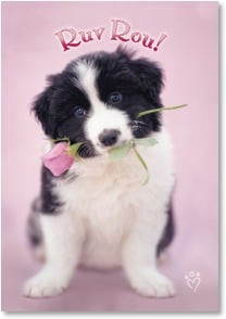 Valentine's Day Card - Ruv Rou! | Rachael Hale® | 2000179-P | Leanin' Tree