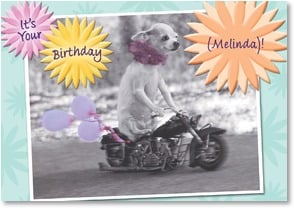 Birthday Card - Live high on the hog! | Christina Bynum Breaux | 2000732-P | Leanin' Tree