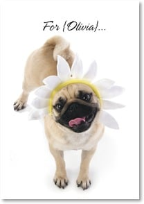 Feel Better Card - A Pug, a Kiss & Sunshine! | Kim Crisler | 2001568-P | Leanin' Tree