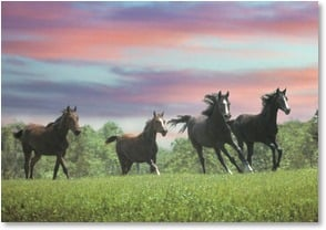 Birthday Card - Wild horses couldn't stop these wishes! | Mark J. Barrett | 2001901-P | Leanin' Tree