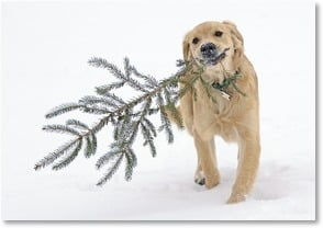 Holiday Card - Pawsing to wish you Happy Holidays | Lisa and Mike Husar | 2002344-P | Leanin' Tree