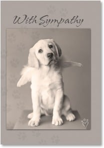 Sympathy Card for Pet - Sympathy on the loss of your dear friend | Rachael Hale® | 2002351-P | Leanin' Tree