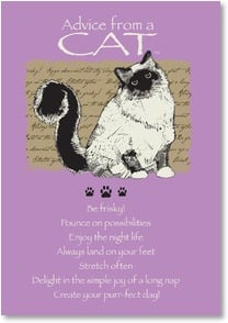 Birthday Card - Advice from a CAT - Paws to celebrate! | Your True Nature® | 2002650-P | Leanin' Tree