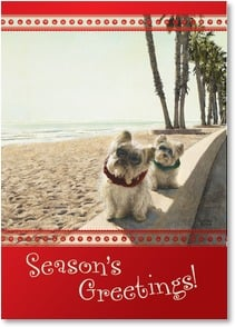 Holiday Card - The happiest holidays under the sun! | Sueellen Ross | 2002719-P | Leanin' Tree