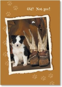 Birthday Card - A Young Pup at Heart!; Romans 12:12 | Robert Dawson | 2003238-P | Leanin' Tree