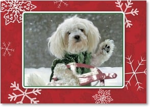Holiday Card - 'Paws'-ing to wish you Happy Holidays | Betsy Cameron | 2003559-P | Leanin' Tree