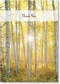Thank You & Appreciation Card - With warm thoughts of gratitude and appreciation. | John Fielder | 2003728-P | Leanin' Tree