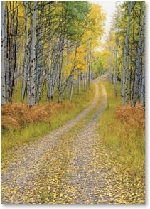 Blank Card - A Drive Through the Aspens | John Fielder | 2003818-P | Leanin' Tree