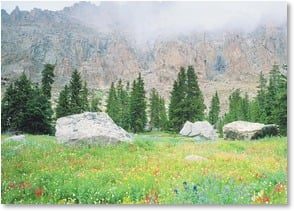 Blank Card - Wildflowers & Fog - Rocky Mountain National Park | John Fielder | 2003839-P | Leanin' Tree