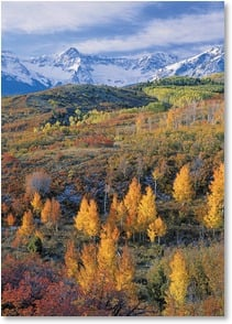 Blank Card - Dallas Divide Autumn - Colorado | John Fielder | 2003842-P | Leanin' Tree