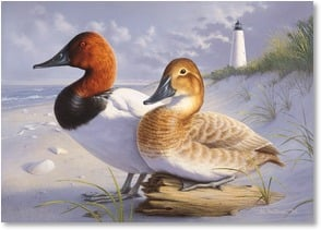 Blank Card - Canvasbacks At Georgetown Lighthouse | Joe Hautman | 2004436-P | Leanin' Tree