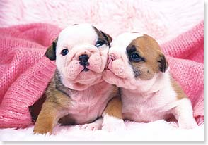 Valentine's Day Card - You are so SMOOCHABLE! | Getty Images | 21654 | Leanin' Tree