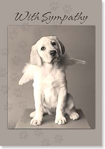 Sympathy Card for Pet - There's a doggy door at the Pearly Gates. | Rachael Hale® | 21920 | Leanin' Tree