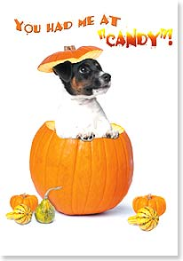 Halloween Card - You had me at 'candy'! | Kim Crisler | 21935 | Leanin' Tree