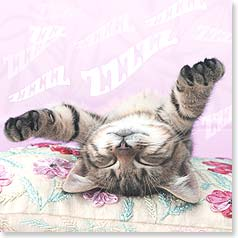 Birthday Card - Catching Some Zzzzzz - 23413 | Leanin' Tree