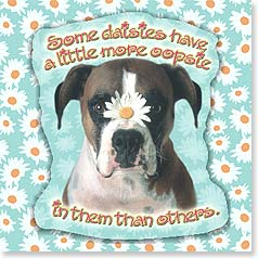 Encouragement Magnet Card - Oopsie Daisy | Kai Sibley | 24069 | Leanin' Tree