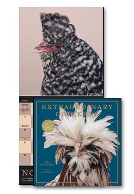 Wall Calendar - Extraordinary Chickens 2013 Wall Calendar - 28823 | Leanin' Tree