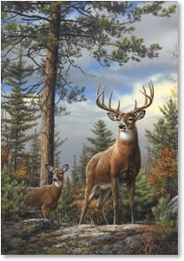 Blank Card - Magnificent Mule Deer | Joe Hautman | 2_2000821-P | Leanin' Tree