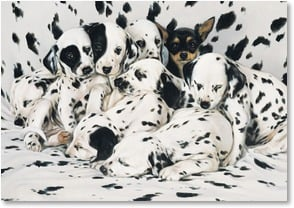 Blank Card - Lots of Spots and One Chihuahua | Brett Longley | 2_2001561-P | Leanin' Tree