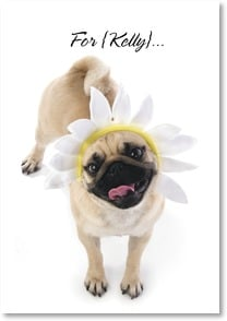 Encouragement & Support Card - Pugs of Sunshine | Kim Crisler | 2_2001568-P | Leanin' Tree