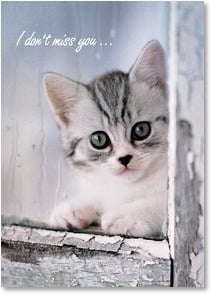 Miss You Card - Oh, who am I kitten? Of course, I miss you!; Ephesians 1:16 | Rachael Hale® | 2_2002012-P | Leanin' Tree