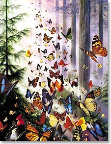 Boxed Blank Note Cards - Note Card Sets | Blank | Butterfly Woods | David Penfound | 35336 | Leanin' Tree