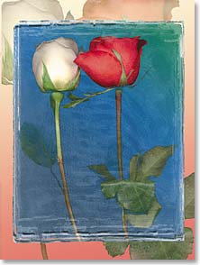 Blank Card - Two Roses | Jennifer O'Meara | 41431 | Leanin' Tree