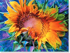 Thinking of You Card - Big Sunny Thoughts Of You | William Lesch | 44299 | Leanin' Tree