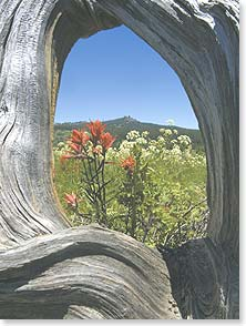 Blank Card - Indian Paintbrush & Wildflowers | Ron Dahlquist | 44655 | Leanin' Tree