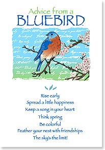 Compliment / You're Special Card - Advice From A BLUEBIRD - 60285 | Leanin' Tree