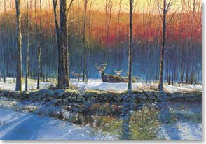 Christmas Card - A quiet in the winter wood... | Gregory F.Messier | 71363 | Leanin' Tree