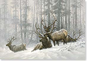 Holiday Card - A Quiet in the Winter Wood | Larry Fanning | 72141 | Leanin' Tree